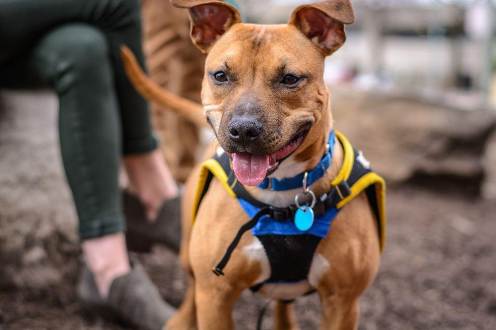 Kurser för nyfikna hundar och deras människor