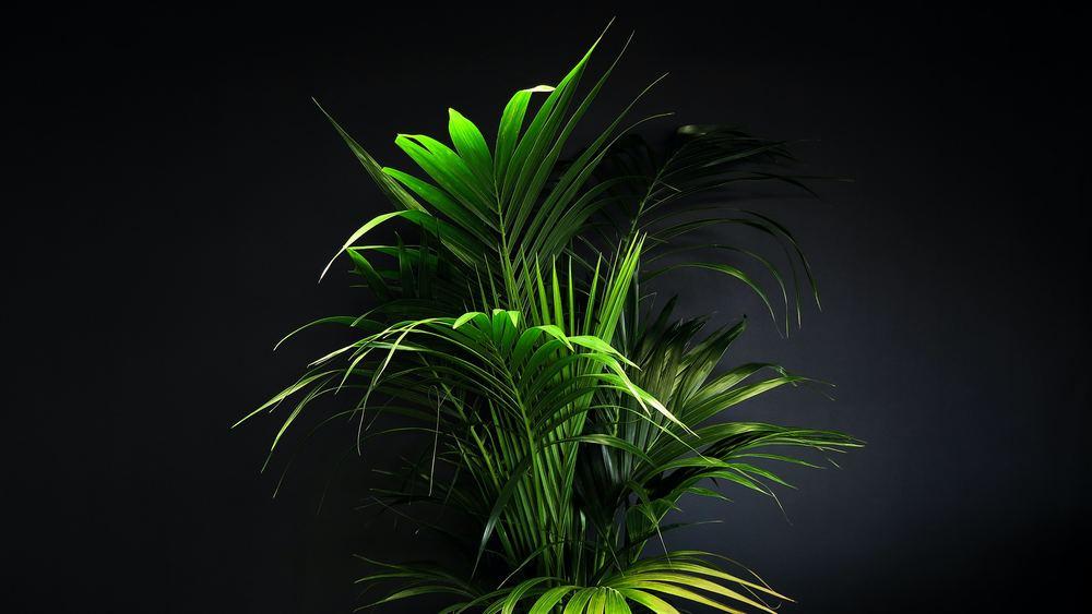 Konstgjorda träd och palmer som skapar stämning