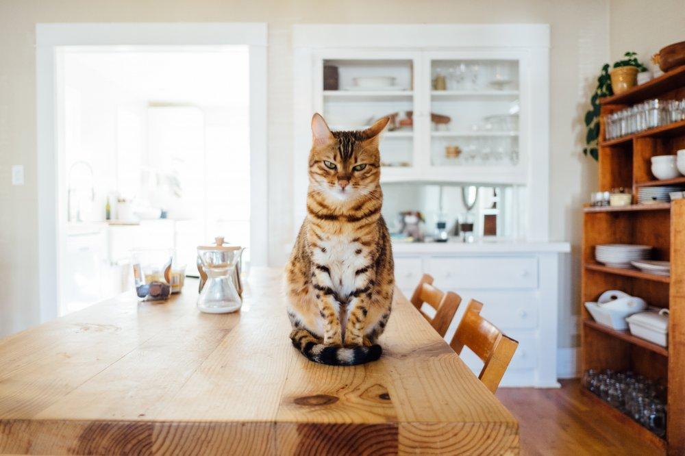 Katters unika karaktär och kattsanden de väljer att gilla