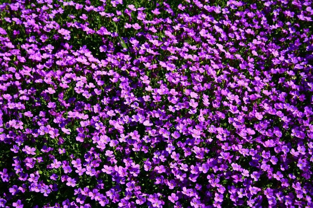 Air Wick kan få hemmet att lukta som en underbar blomsteräng